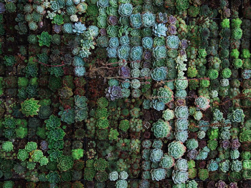 Campo de plantas suculentas para post significado del colibrí